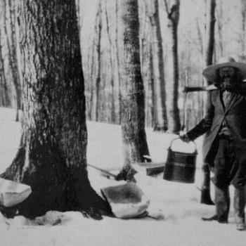История кленового сиропа