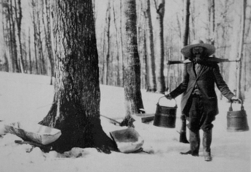 Сбор кленового сока. История кленового сиропа